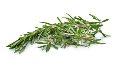 fresh twig of rosemary on white background