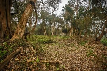 Wall Mural - Beautiful dense forest of Kaziranga National Park/Beautiful dense forest of Kaziranga National Park