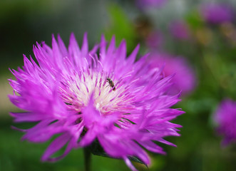 Purple flowers on beautiful bokeh background.