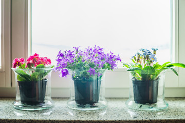 Lovely home decoration with glass flowers pots on windowsill