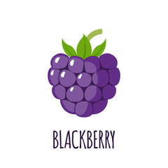Blackberry fruit icon in flat style
