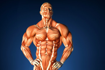 Bodybuilder anatomy. Contains clipping path