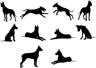Dog, breed, Dog, vector, graphic,animal, illustration, art, picture
