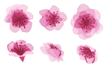 hand-drawn sakura flowers