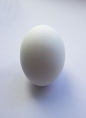 one white egg object on a white background isolated