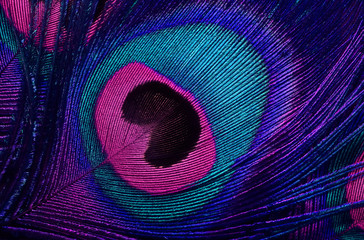 Papiers peints Paon bright background the pattern of a peacock's tail