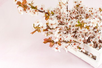 Blooming flowers on tree branches
