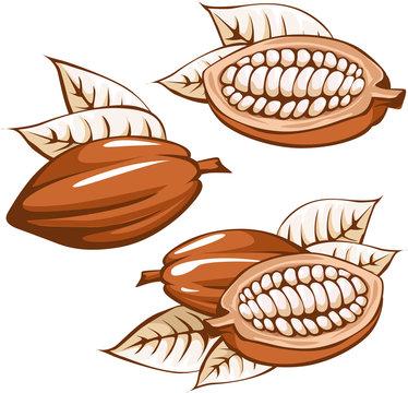 brown cocoa bean - vector illustration