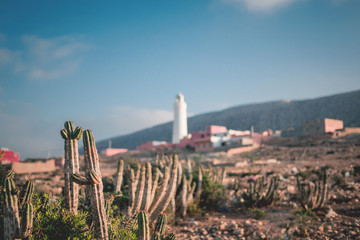 Cactus with lighthouse in the background