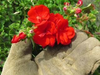 Caring flower