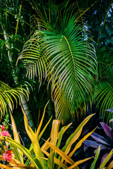 Tropical Garden lush green foliage and plants