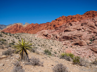 Rocks of Red Rock Canyon