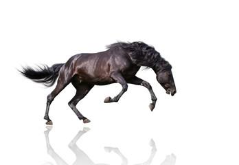 isolate of the black dangerous horse