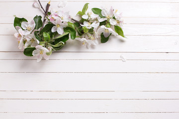 Background with tender apple blossom  on white wooden  planks.