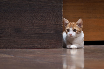 Scared kitten looks out from behind a wooden board