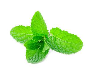 Peppermint closeup leaf.