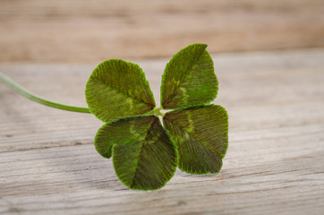 four-leaf clover for good luck isolated on wooden background