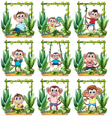 Monkeys in the wooden frame