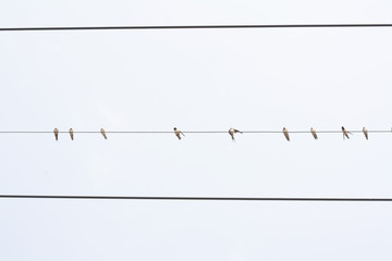 bottom view of birds on wire