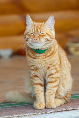 red smiling cat resting,sleeping sitting.vertical image