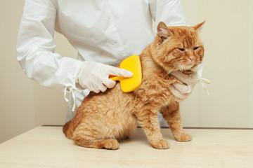 women veterinarian combs red cat