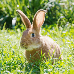 Smiley bunny in green grass, easter bunny