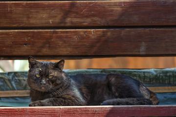 Stray  black  cat on bench
