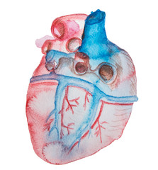 watercolor realistic heart