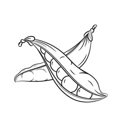 Hand drawn pea pods sketches on white background