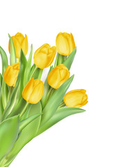 Tulip flowers as a holiday postcard. EPS 10
