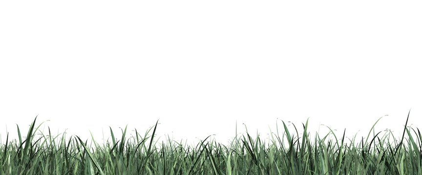 Grass close up isolated on white panorama