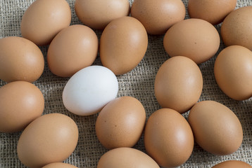 yellow chicken egg and the white in the middle
