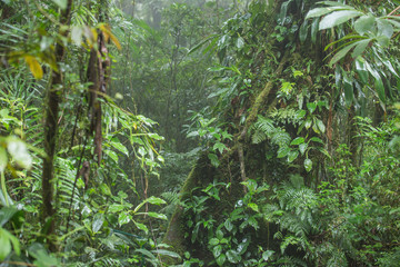 The jungle landscape