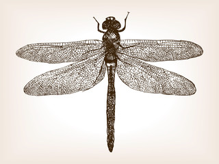 Dragonfly insect hand drawn sketch vector