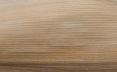 Closeup palm leave texture background