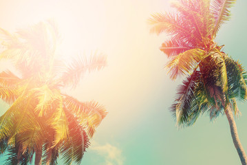 Palm Tree Sun Light Travel Background Design Toned