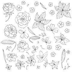 vector set of flowers and leaves