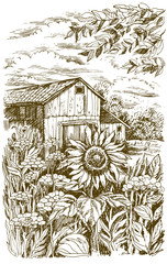Landscape with sunflower. Vector hand drawn graphic illustration.