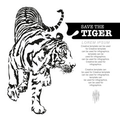 Tiger walking, black and white colour, illustration design.