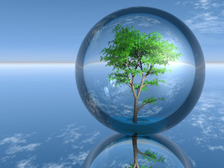 tree in a glass bubble