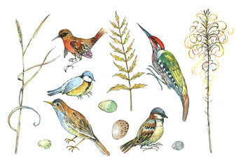bird, sparrow tit, woodpecker, branches and leaves, watercolor. For background, textiles.