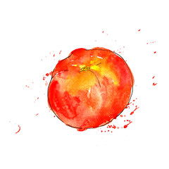 watercolor red tomato