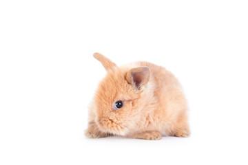 Baby rabbit isolated on white
