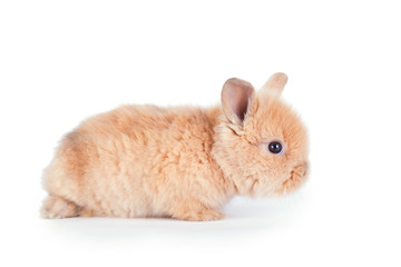 Baby rabbit isolated on white