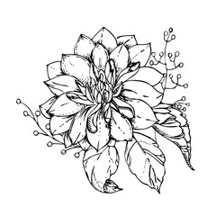 hand drawn ink floral ornament with flowers Dahlia. vector eps 10