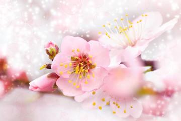 Fiore di mandorlo - Primavera