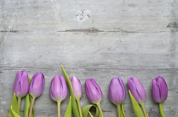 Old grey wooden background with purple white tulips,snowdrop and crocus border in a row and empty copy space, spring summer decoration