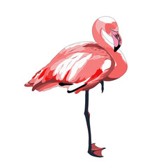 flamingo. vector image