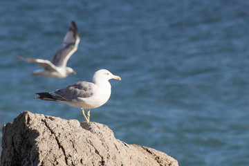 Seagull on a rock against the backdrop of the sea