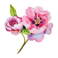Flower pink peony watercolor